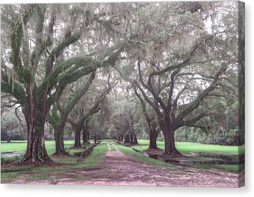 Oaks In Laurel Hill Park, Mount Pleasant, Sc Canvas Print by Rick Berk