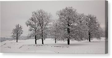 Oaks In Winter Canvas Print by Gabriela Insuratelu