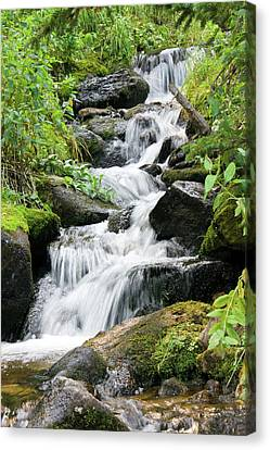 Canvas Print featuring the photograph Oasis Cascade by David Chandler