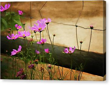 Canvas Print featuring the photograph Oasis In The Desert by Lana Trussell