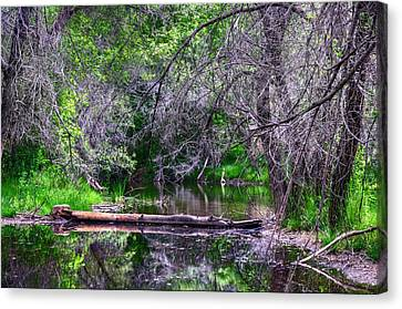 Oasis Of The Lake. Canvas Print