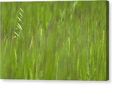 Oatfield Canvas Print by Michael Mogensen