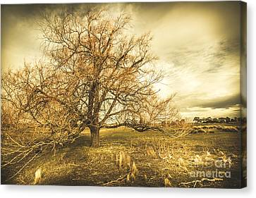 Oatlands Autumn Tree Canvas Print by Jorgo Photography - Wall Art Gallery