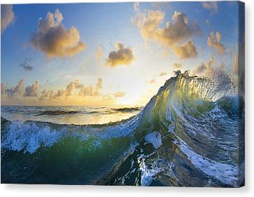 Ocean Bouquet  -  Part 1 Of 3 Canvas Print by Sean Davey