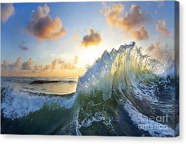 Ocean Bouquet  -  Part 2 Of 3 Canvas Print by Sean Davey
