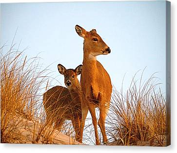 Ocean Deer Canvas Print