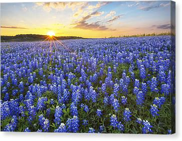 Ocean Of Bluebonnets At Sunset 1 Canvas Print by Rob Greebon