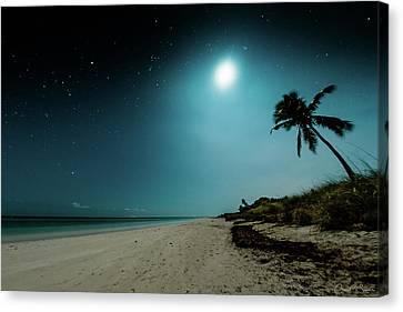 Ocean Palm Canvas Print by Chris M Sheridan