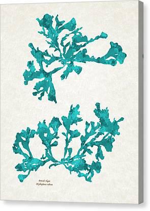 Ocean Seaweed Plant Art Phyllophora Rubens Canvas Print by Christina Rollo