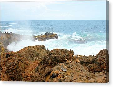 Ocean Spray Off The Rugged Coast Of Aruba Canvas Print by Design Turnpike