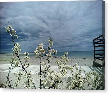 Ocean Spring Canvas Print by Robert Nickologianis