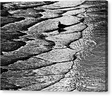 Ocean Surf Beach Scene In Black And White Format Canvas Print by Carol F Austin