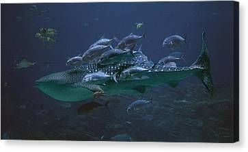 Nature Study Canvas Print - Ocean Treasures by Betsy Knapp