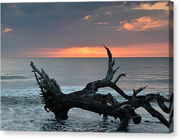 Ocean Treescape At Sunrise Canvas Print by Bruce Gourley