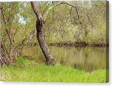 Canvas Print featuring the photograph Oceano Lagoon by Art Block Collections