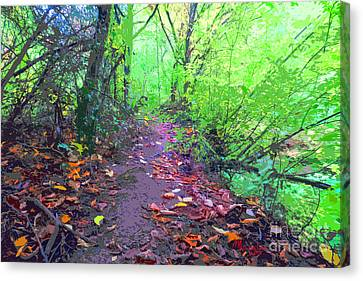 October Forest Pathway Canvas Print