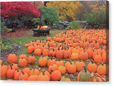 October Harvest Canvas Print by John Burk