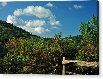 October In The Smokeys Canvas Print by William Jones