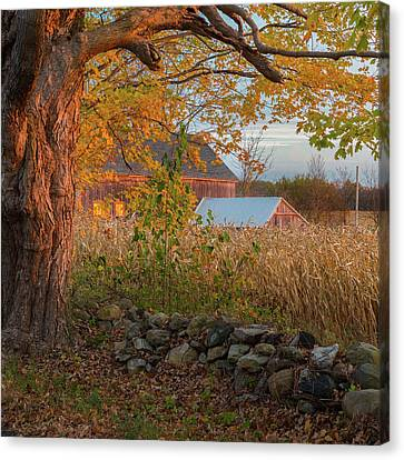 October Morning 2016 Square Canvas Print by Bill Wakeley