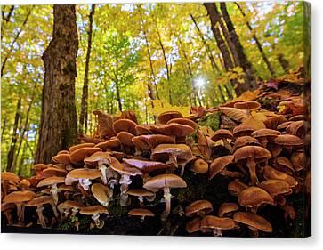 October Mushroom Canvas Print by Mircea Costina Photography