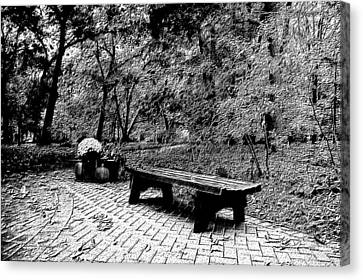 October On The Woodland Path Bw Canvas Print by Thomas Woolworth