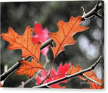 Canvas Print featuring the photograph October by Peggy Hughes