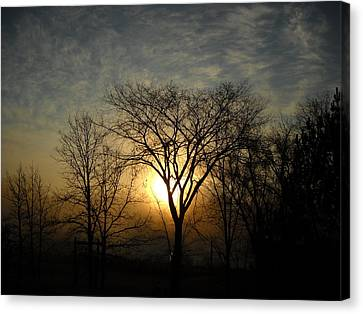 October Sunrise Behind Elm Tree Canvas Print