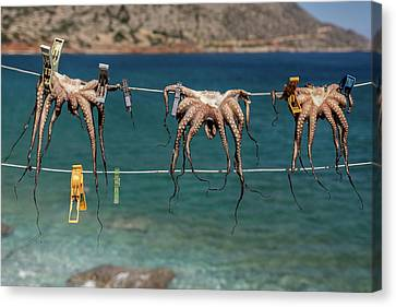 Octopus Canvas Print - Octopodes Hanging Out by Happy Home Artistry