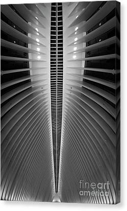 Oculus Spine  Canvas Print by Michael Ver Sprill