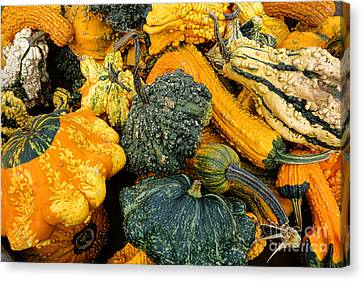 Odd Gourds One Canvas Print by Olivier Le Queinec