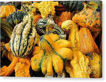 Odd Gourds Two Canvas Print by Olivier Le Queinec