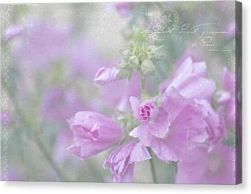 Country Magazine Decor Canvas Print - Odd Stemmed Wild Flower  by Sandra Foster