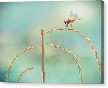 Dragonfly Eyes Canvas Print - Odonata by Steven Michael