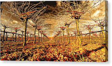 Canvas Print featuring the photograph Off Of The Vine by Steve Siri