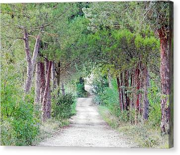Off The Beaten Track Canvas Print by Dorothy Berry-Lound
