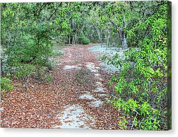 Off The Beaten Trail Canvas Print by JC Findley
