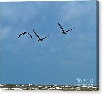 Canvas Print featuring the photograph Off We Go by Ken Frischkorn
