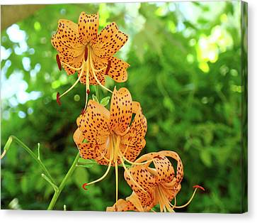 Office Art Prints Tiger Lilies Flowers Nature Giclee Prints Baslee Troutman Canvas Print by Baslee Troutman