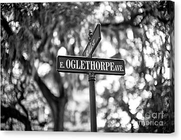 Oglethorpe Avenue Canvas Print