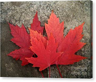 Oh Canada Canvas Print