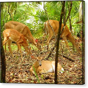 Oh Deer Four Canvas Print