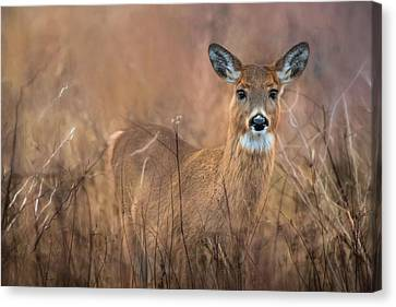 Canvas Print featuring the photograph Oh Deer by Robin-Lee Vieira