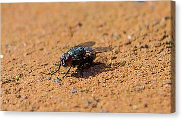 Oh, Fly Canvas Print