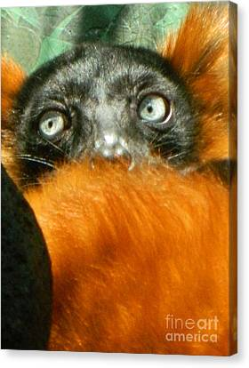 Oh My What Big Eyes You Have Canvas Print