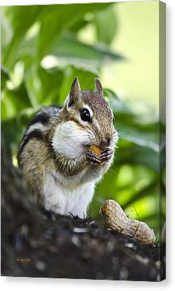 Oh Nuts Canvas Print by Christina Rollo