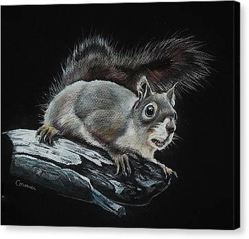 Oh Nuts  Canvas Print by Jean Cormier