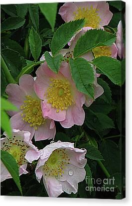 Canvas Print featuring the photograph Oh The Wild Rose Bush by Deborah Johnson