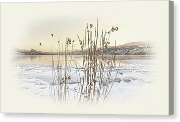 Canvas Print featuring the photograph Okanagan Glod by John Poon
