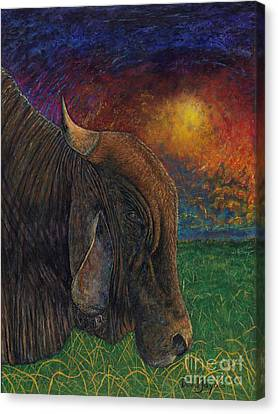 Okeechobee Brahman Canvas Print by David Joyner