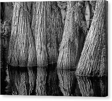 Okefenokee Cypress Canvas Print